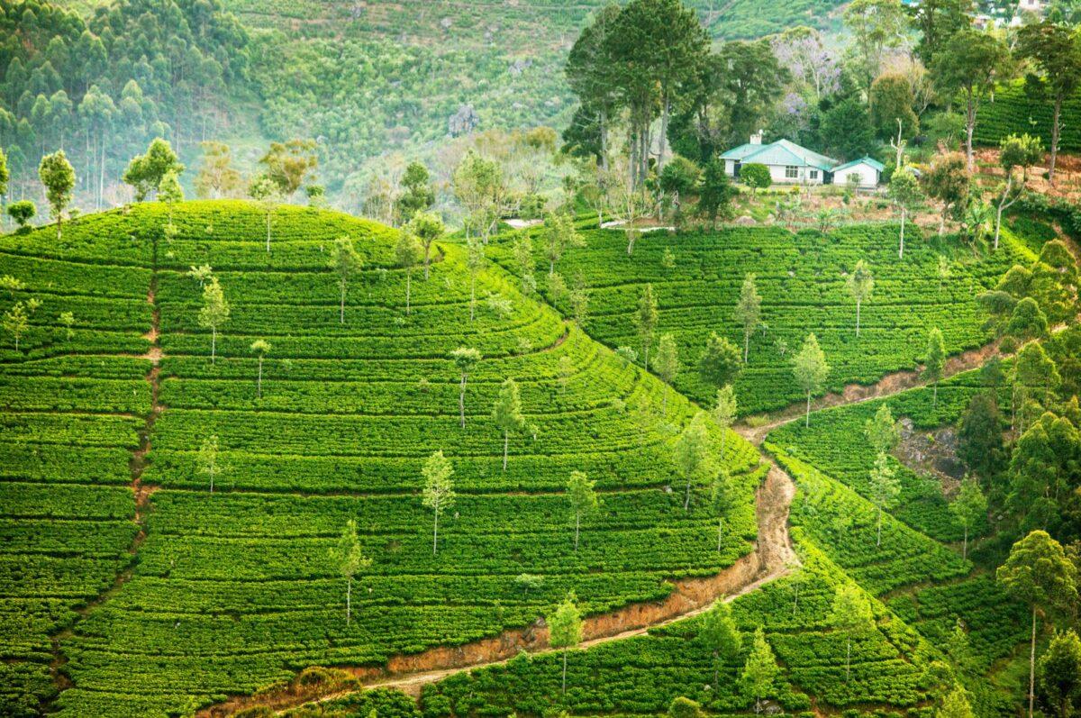 Dardzsiling út a teaültetvényeken túl